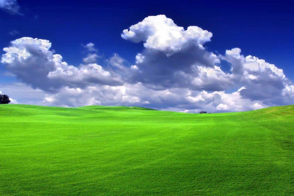 Areá verde viveiros